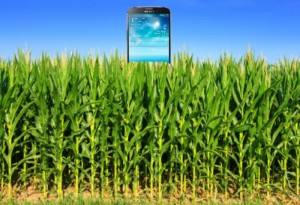 A picture of a Samsung phone in the middle of a corn field...Corny!